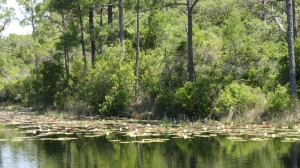 Alligator Lake on Scenic 30a