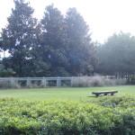 Watercolor Fl Dog Park